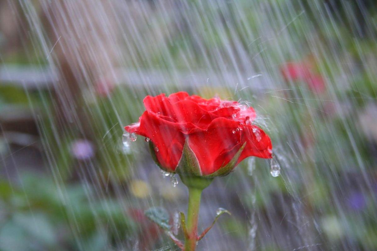 фото красивых цветов и дождь состоит двух этажей