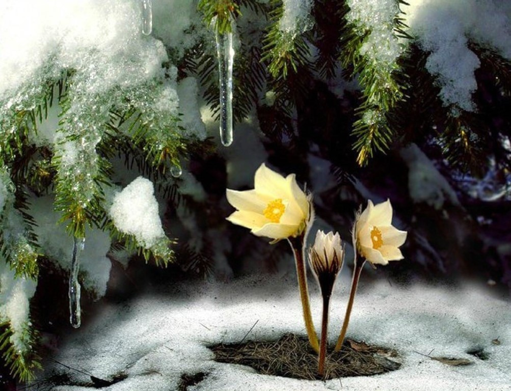 фото весенний снег гиф