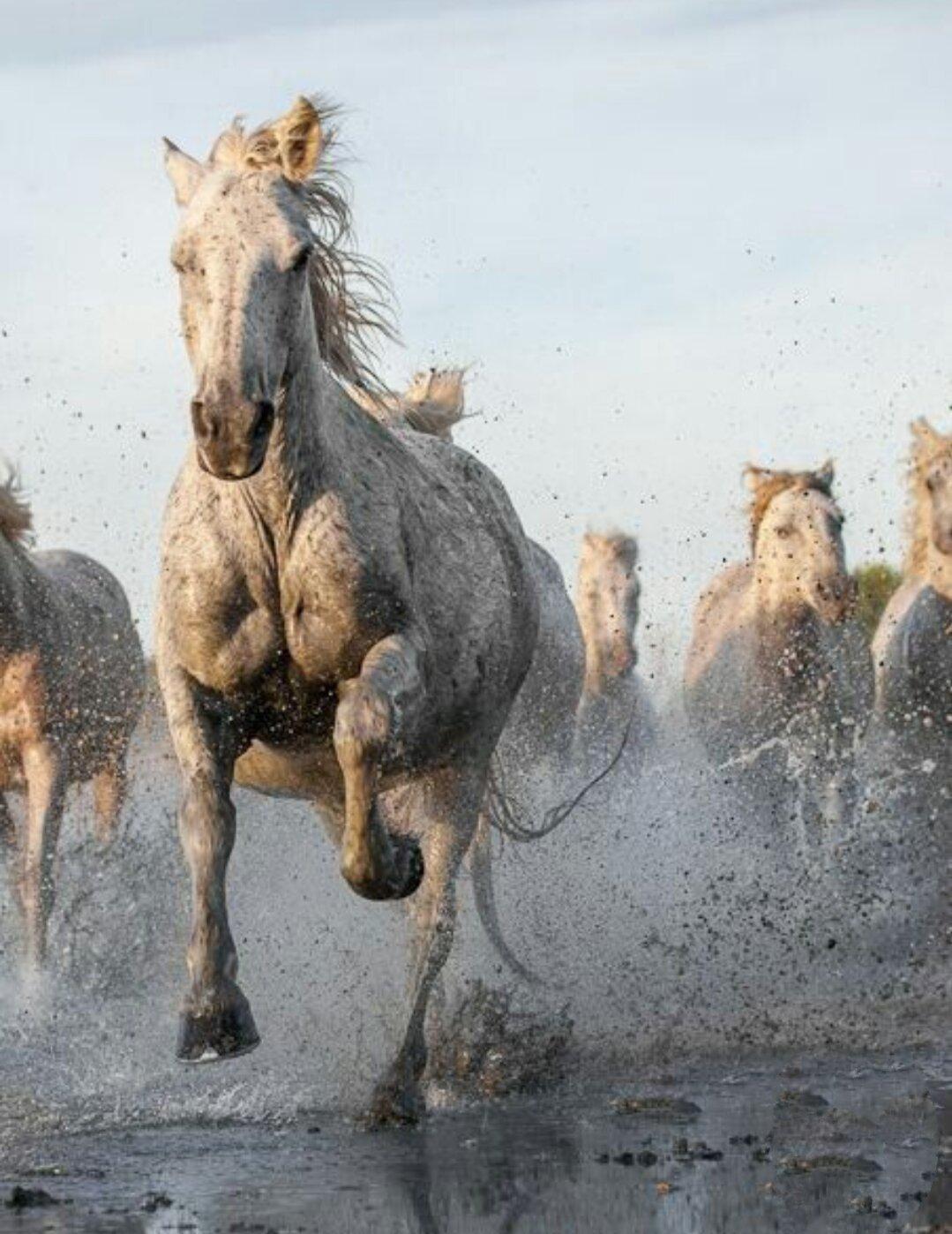 взрывом картинки убегаю от коня симферополя