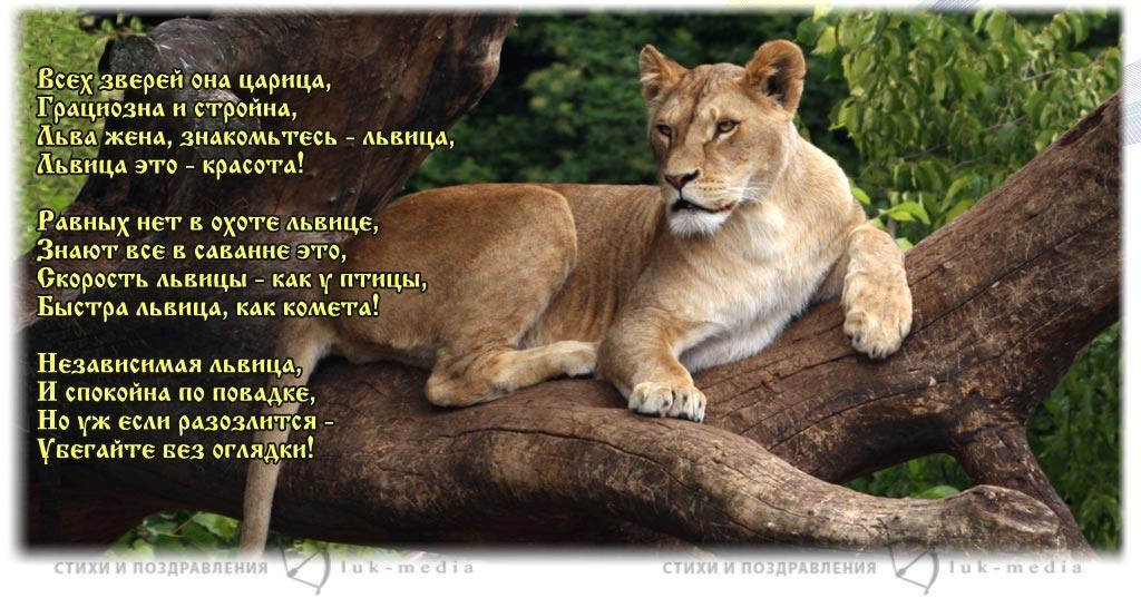 Прикольные поздравления для львицы